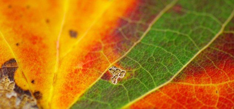 Jesień idzie wielkimi krokami