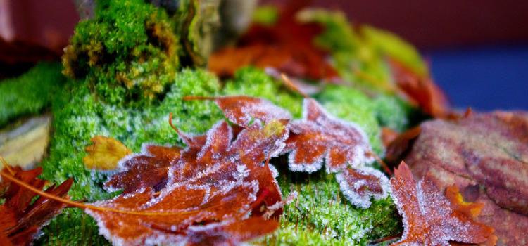 Ostatnie jesienne zdjęcia bonsai