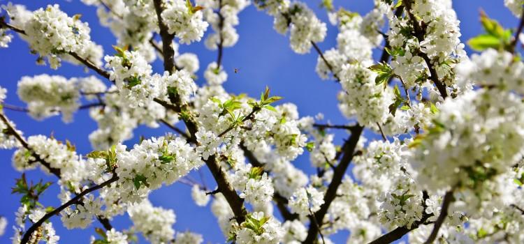 Wiosna ach to ty!