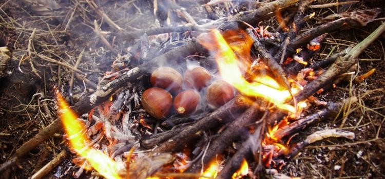 Kasztany jadalne z ogniska